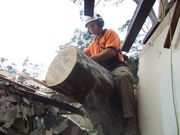 Find Affordable Tree Lopping Services Sydney