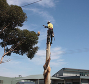 Get Cost-Effective Tree Stump Removal in Castlemaine