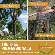 Trained & Qualified Tree Professionals
