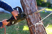 Tree Lopping & Cutting Services St Albans