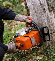 Tree Maintenance Program Goodna